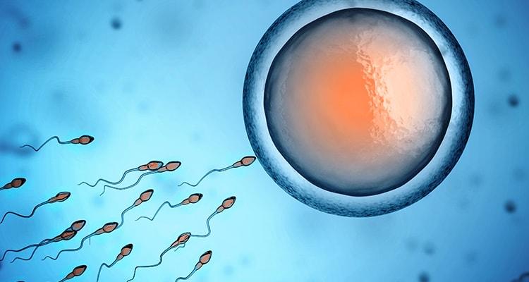 Consulta de Infertilidade | Grupo HPA Saúde